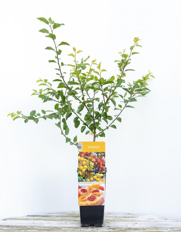 Drobné ovocie - Mirabelka